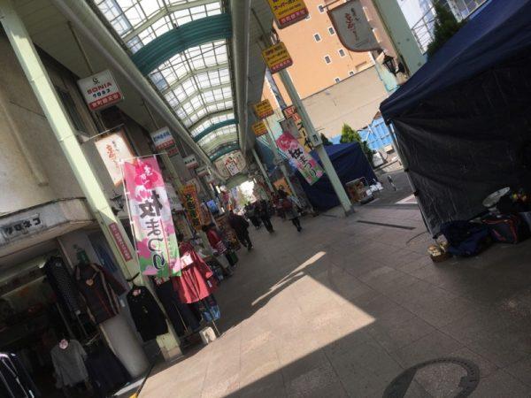 京町桜まつり始まっています!!